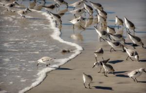 swamis_birds